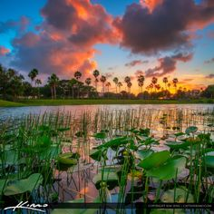 Beautiful sunset at a small lake in Palm Beach Gardens with some nice lily pads behind the Gardens Mall. HDR image created using Photomatix Pro and Topaz software.