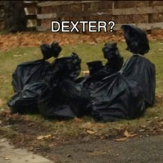 """Honey, didn't we agree that leaving the """"garbage"""" on the lawn was a bad idea? Dexter Morgan Quotes, Debra Morgan, Funny Images, Funny Pictures, Showtime Series, Horror Icons, Me Tv, Serial Killers, Best Shows Ever"""