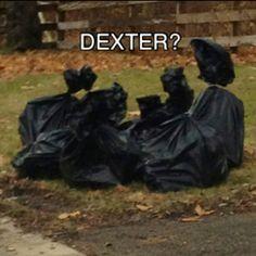 Dexter Morgan, is that you?
