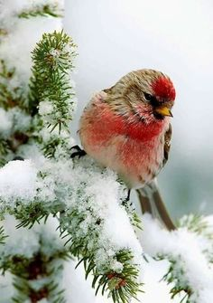 Pretty Birds, Love Birds, Beautiful Birds, Animals Beautiful, Winter Pictures, Nature Pictures, Animals And Pets, Cute Animals, Winter Scenery
