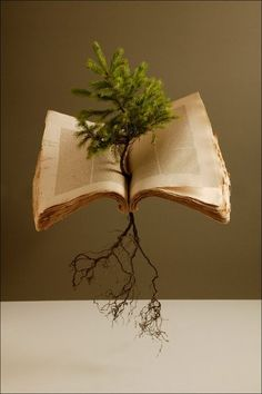 tree in book sculpture