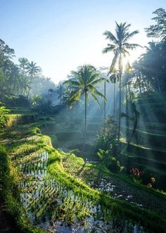 Visit: Flores, Indonesia - Travel Here, Not There: Less-Crowded Alternatives To Popular Travel Destinations - Photos Beautiful Islands, Beautiful World, Places To Travel, Travel Destinations, Bali Travel Guide, Vinales, Excursion, Photos Voyages, Kuta