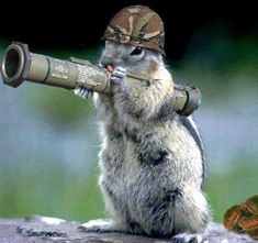 Funny Squirrel Pictures, Funny Animal Pictures, Funny Animals, Cute Animals, Small Animals, Wild Animals, Funny Photos, Squirrel Girl, Cute Squirrel
