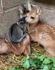 Cute Wild Animals, Cute Little Animals, Cute Funny Animals, Animals Beautiful, Animals And Pets, Cute Animal Videos, Cute Animal Pictures, Cute Videos, Cute Baby Cats
