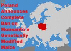 Poland Announces Complete Ban on Monsanto's Genetically Modified Corn