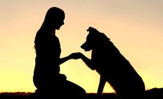 Sfilata dedicata ai cani