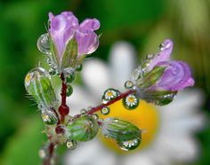 drop reflections by tugba kiper, via 500px