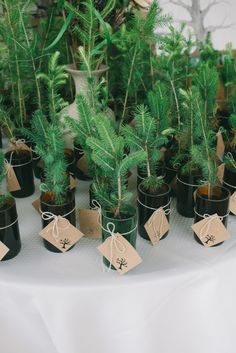send your guests home with a tiny tree or plant as a favor