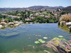 Koi Ponds | #HGTV #landscapedesigns