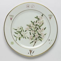 Related image Native Plants, Flora, Decorative Plates, Home Decor, Porcelain Ceramics, Decoration Home, Room Decor, Plants, Home Interior Design