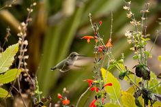 Canon EOS Rebel T3i Reviews|nature picture nature picture nature picture nature picture