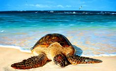 View and buy Green Peace art image by Hawaii's nature artist Patrick Ching. On the remote Northwest Hawaiian Islands green sea turtles gather in the summer months. Hawaiian Monk Seal, Hawaiian Art, Save The Sea Turtles, Turtle Love, Turtle Beach, Peace Art, Nature Artists, Marine Life, Sea Creatures