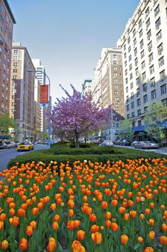 12 Photos That Prove Park Avenue is the Best Place to Take a Spring Stroll  - TownandCountryMag.com