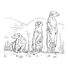 Meerkat Coloring Pages The Little Guards