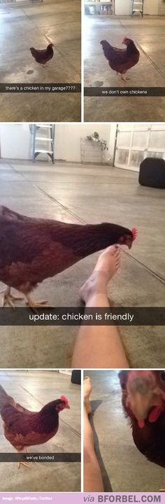 Magical Chicken… OMG my friend sent this to me a few days ago and I thought she was the one with the chicken in her garage lol