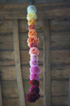 A colorful garland of dahlias