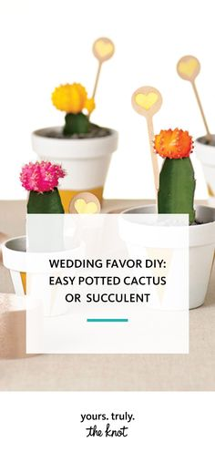 Wow your guests with some colorful DIY mini potted cacti for easy wedding favors that will satisfy your succulent obsession.