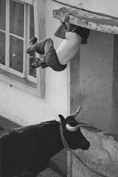 February 02, 1976: Agility means survival when young men of sporting blood taunt bulls, Terceira Island, The Azores, Portugal. Photo by O. Louis Mazzatenta/National Geographic/Getty Images. °