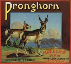Upland CA, Pronghorn Brand fruit crate label