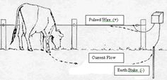 Electric fencing for dummies - Features- Horsetalk.co.nz