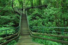Thenmala eco Tourism