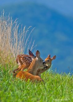 Doe and fawn. So sad that people enjoy killing deer so much.