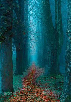Pathway by Mevludin Sejmenovic on 500px