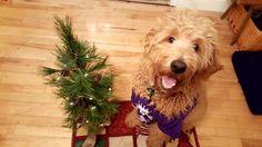 Christmas Cooper
