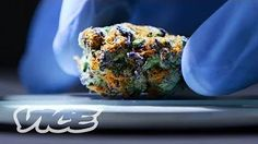 If it's not handled properly, weed can collect toxins, pesticides, and other harmful chemicals that can have long-term impacts on your health and well-being. We met up with ProVerde's CEO. Cannabis Edibles, Cbd Hemp Oil, Salmon Burgers, Health And Wellness, High Road, Breakfast, Ethnic Recipes, Lab, How To Make