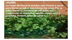 Fresco, Parsley, Herbs, Food, Medicinal Plants, Soups, Remedies, Salud, Fresh