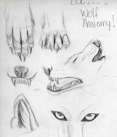 LOL wolf anatomy 101 by Lucky978 on deviantART