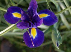 flor de lis planta blanca - Buscar con Google