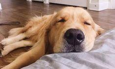 Imagens fofas para usar como quiser - Imagens para Whatsapp Dogs, Wallpaper, Animals, Disney, Fluffy Animals, Cute Wallpapers For Mobile, Cell Wall, Animal Wallpaper, Cute Dog Photos