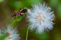 Assassin bug by rathithevy #nature #photooftheday #amazing #picoftheday
