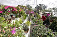 아름다운 꽃풍경이 펼쳐진 국제친선식물관2