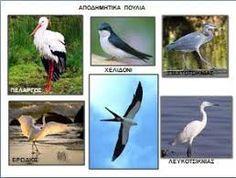 Αποτέλεσμα εικόνας για αποδημητικα πτηνα στην ελλαδα