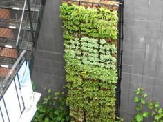 Vertical Garden / Eco Vertical Mur Végétal   Http://verticalgardening.com
