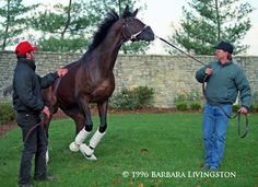 The unconquerable, invincible, unbeatable CIGAR   Daily Racing Form