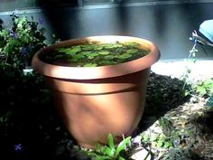 CHEAP AND EASY PORTABLE FISH POND - A GOOD SOURCE OF ORGANIC FERTILIZER ...