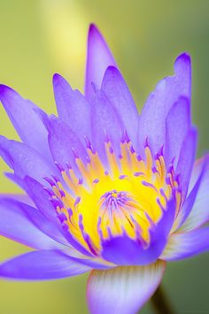 ~~The grand opening - a lotus during late morning by ngkokkeong~~
