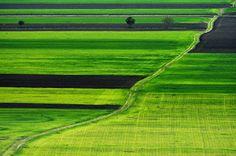 ©opiraituri shi pozăreli: Diagonală