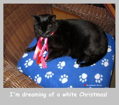 Dreaming of a white Christmas Ms Samantha The Cat
