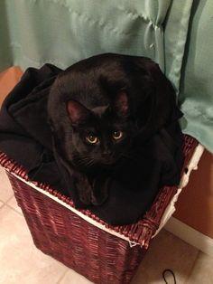 ❤️ black cats
