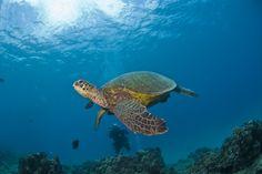 I love #turtles !!!!!!