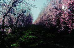 fairy bkground