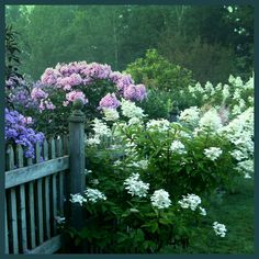 Phlox and hydrangea and a weathered fence