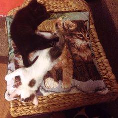 猫と猫と猫 #Cat #Baby #子猫 #黒猫 #白猫
