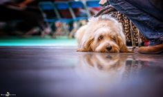 Picture taken at crufts 2014