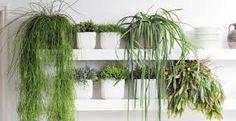 Best décoration bureau images decorate work