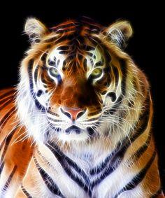 beautiful animals on earth   Stunning Animal Fractal Art By Steve Wilson   The Stuff Makes Me Happy
